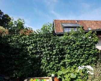 Standortverbesserung Amberbaum und Bux